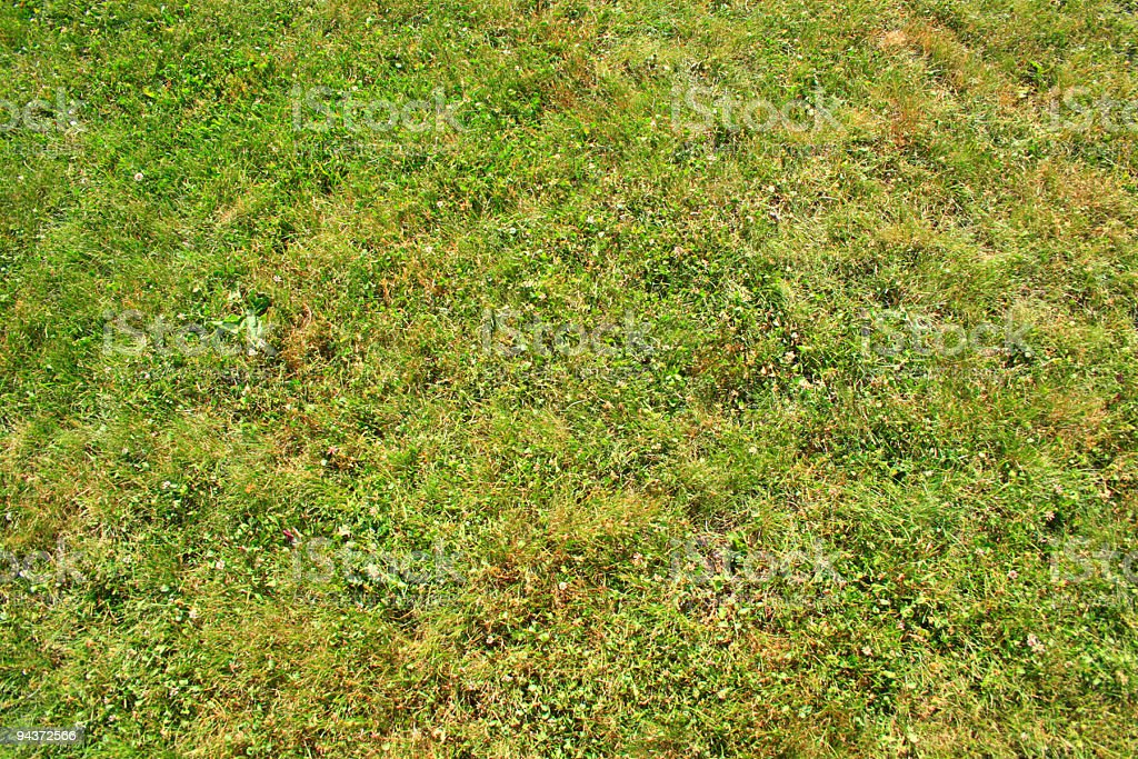 Lawn texture royalty-free stock photo