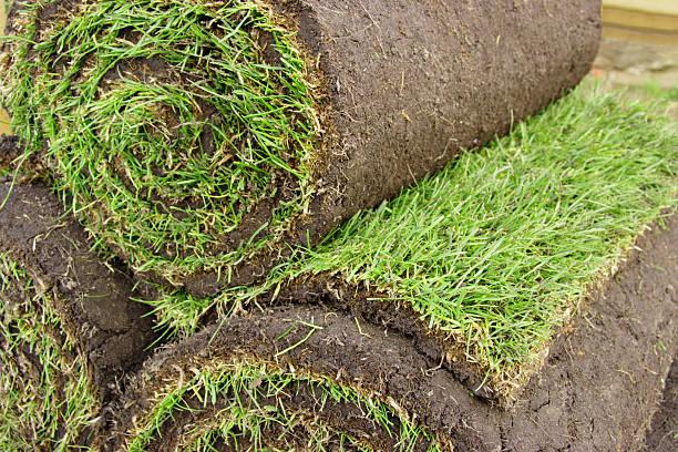 Rasen zum Mitnehmen – Foto