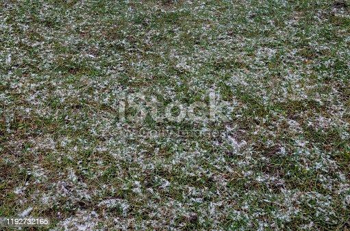 639394370 istock photo Lawn under the snow. Green grass in winter season. green grass under first snow. abstract autumn background. 1192732165