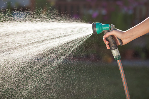 Female hand holding a shower that sprayed water on the lawn