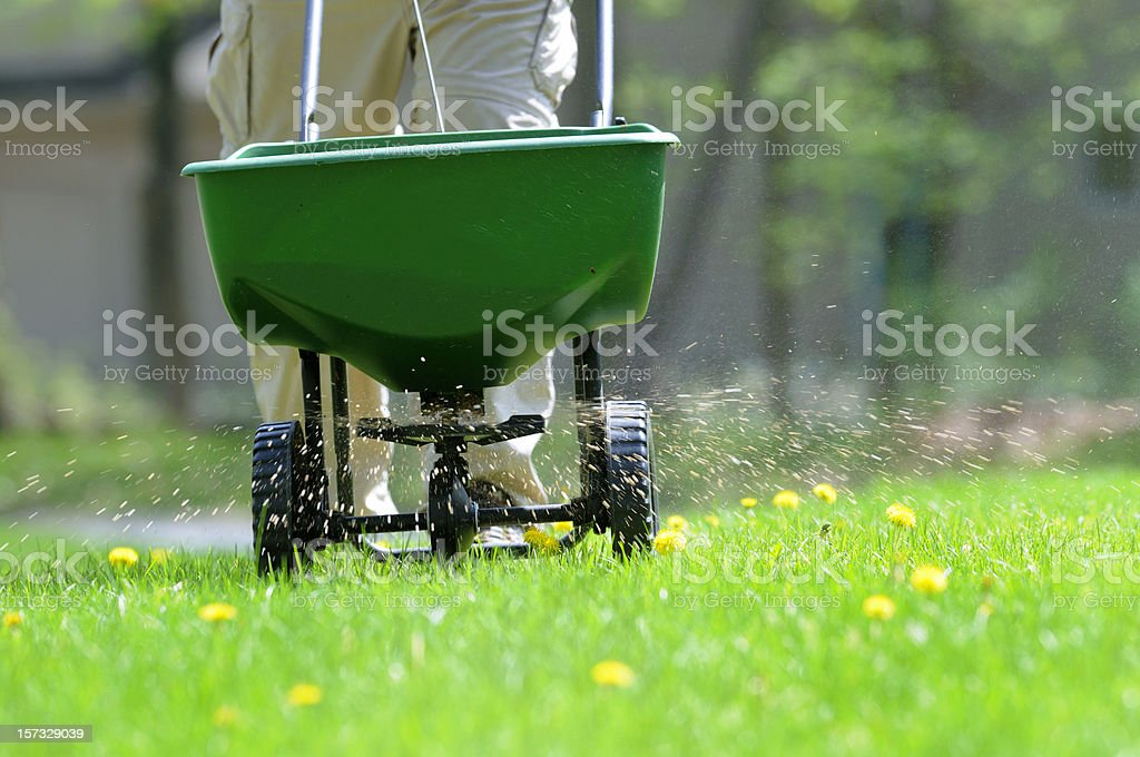 Lawn weed and feed stock photo