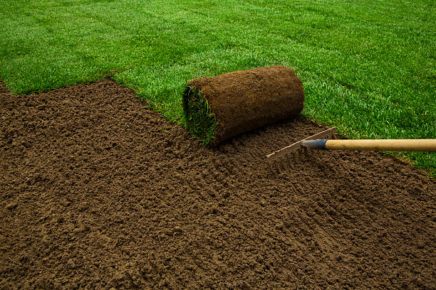 Lawned garden Gardener applying turf rolls in the backyard turf stock pictures, royalty-free photos & images