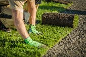 istock Lay Natural Grass Turfs 1197736211