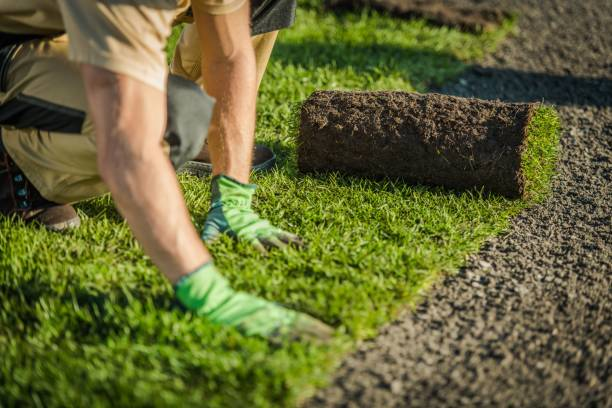 Lay Natural Grass Turfs Professional Landscaper Lay Natural Grass Turfs. Natural Grass Installation. Gardening Industry Theme. landscaped stock pictures, royalty-free photos & images