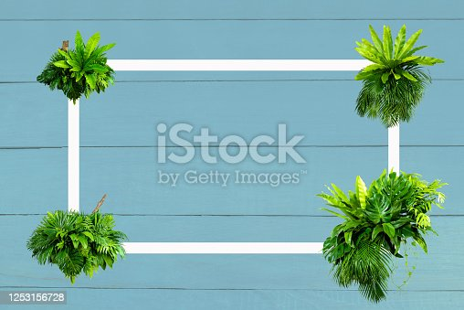 Lay out the creative frame of a tropical flat nature. Place Monstera coconut adn fern on the wood Blue color, a rustic grunge with a retro holiday, tropical jungle and travel conce