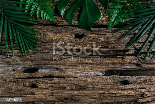 Lay out the creative frame of a tropical flat nature. Place Monstera coconut adn fern on the wood White color, a plastered wall, a rustic grunge with a retro holiday, tropical jungle and travel conce