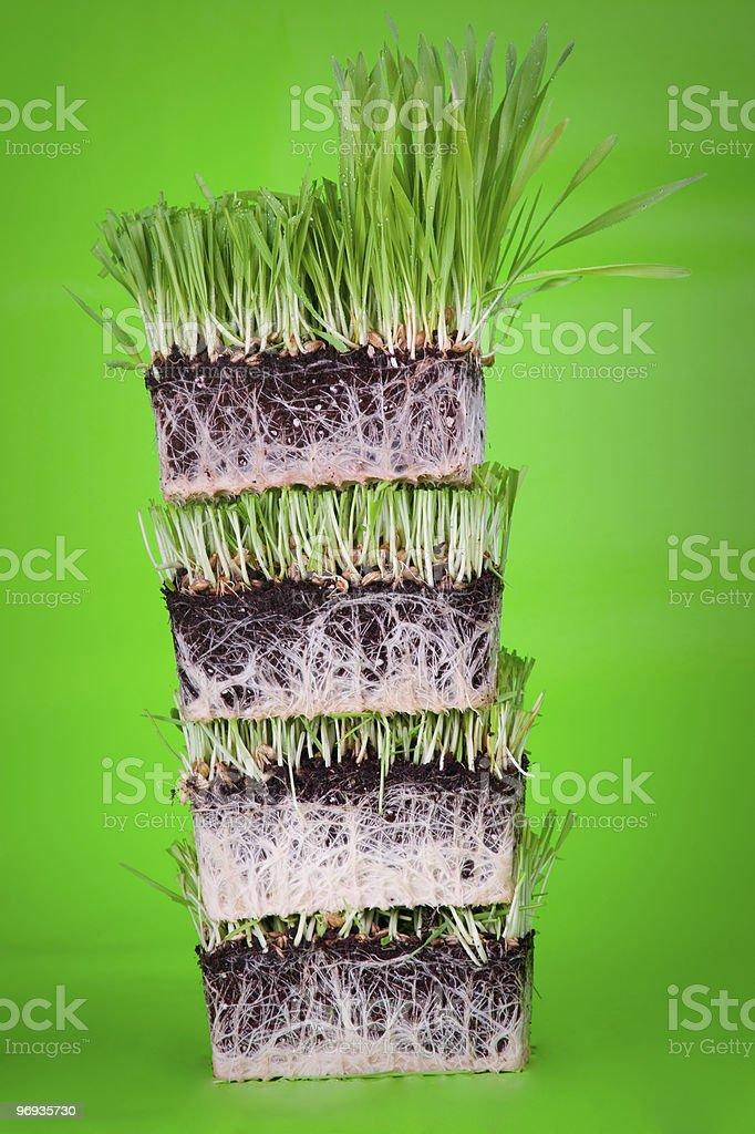 Layered grass royalty-free stock photo