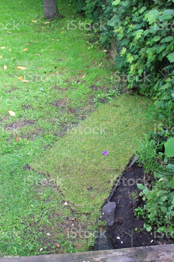 Laying new turf stock photo