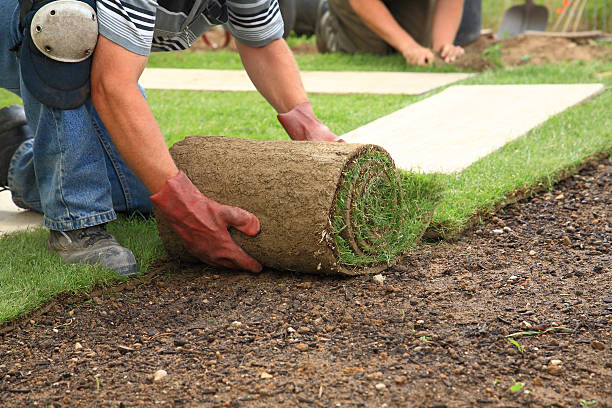 Laying sod for new lawn Man laying sod for new garden lawn turf stock pictures, royalty-free photos & images