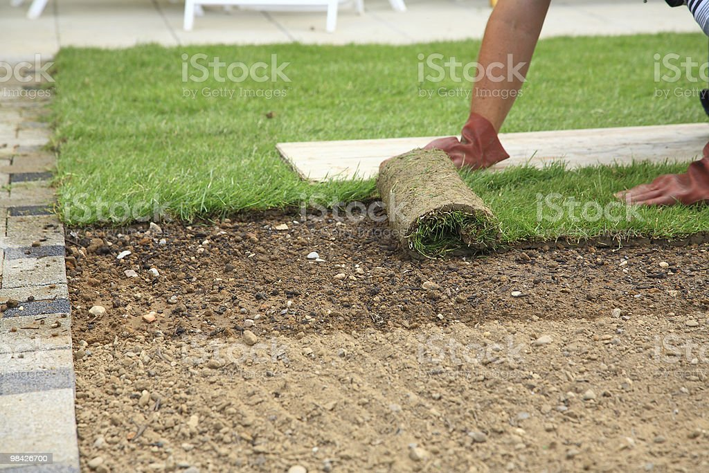 Laying sod for new lawn royalty-free stock photo