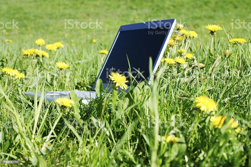 ノートパソコンに及ぶ芝生 ストックフォト