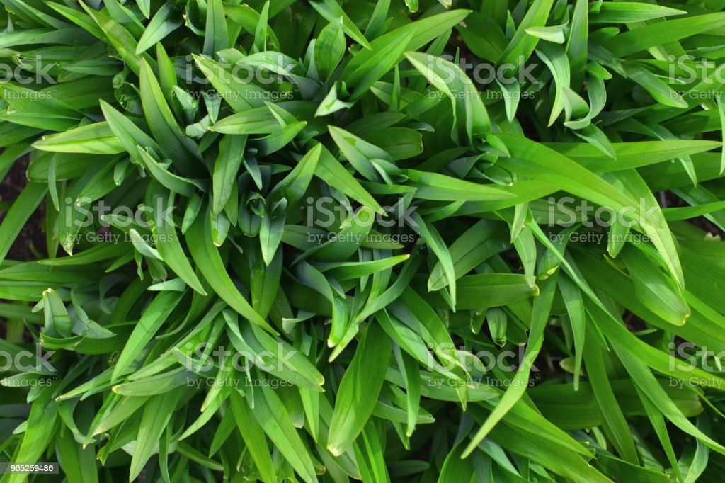 layout made of green leaves. Flat lay. Nature concept royalty-free stock photo
