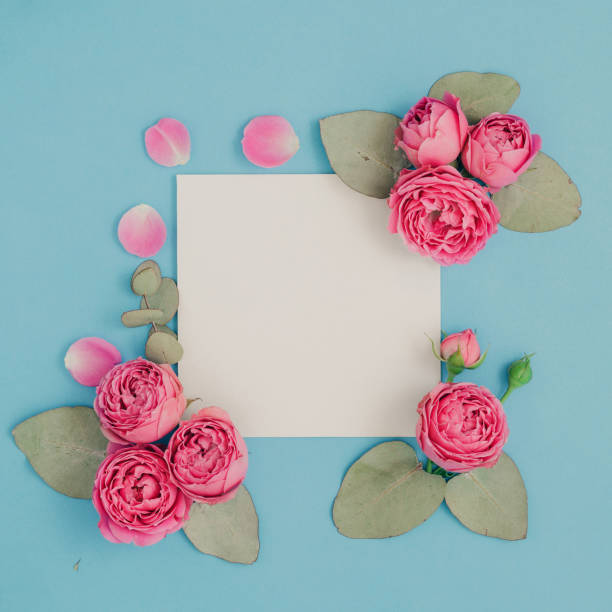 Layout with pink roses and eucalyptus leaves on a blue background picture id875269996?b=1&k=6&m=875269996&s=612x612&w=0&h=etwtndticrhwjinxcqoa7fi y8ox9irzauorxdpjck0=