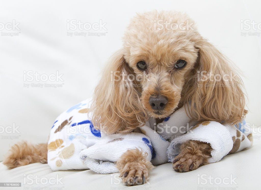 Lazy Bitch royalty-free stock photo
