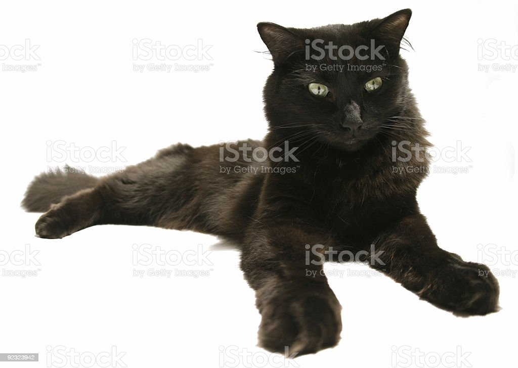 Lazy Black Cat royalty-free stock photo