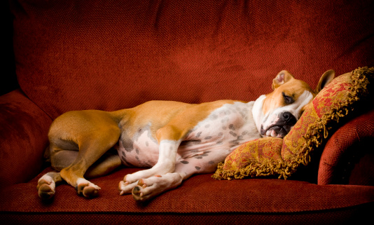 Собака на кровати