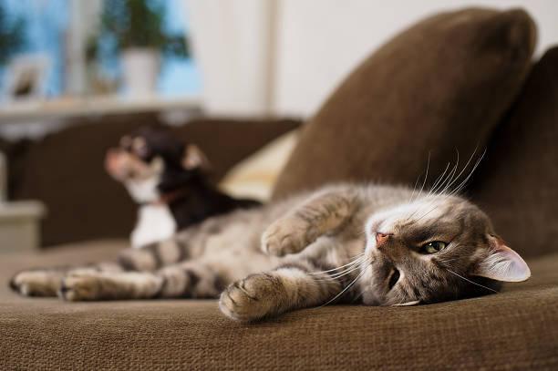 faule katze - hunde träger stock-fotos und bilder