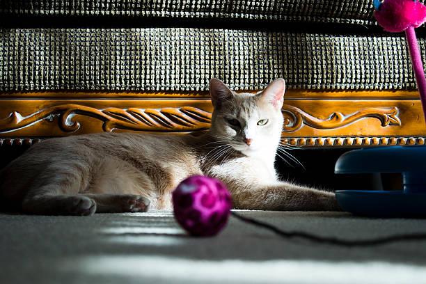 Lazy cat picture id479045855?b=1&k=6&m=479045855&s=612x612&w=0&h=3kbotvjmn6oueedva5 adkqfhsf3qnml67bmdvply8e=