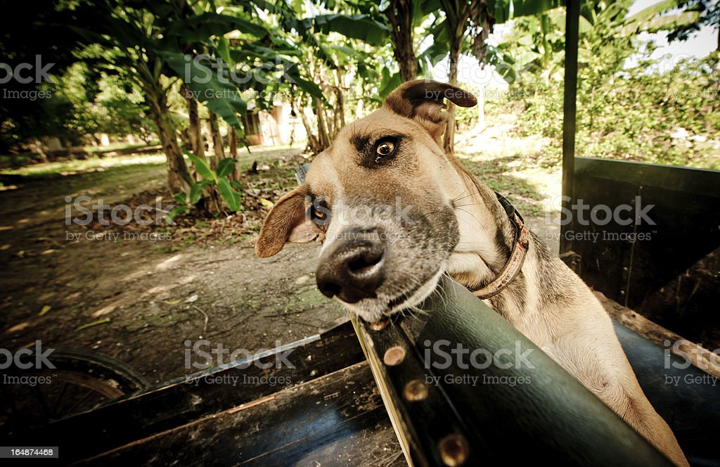 lazy dog royalty-free stock photo