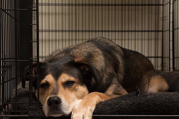 lazy dog - holzkiste stock-fotos und bilder