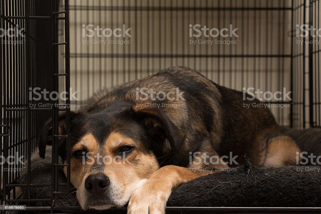 Lazy Dog stock photo