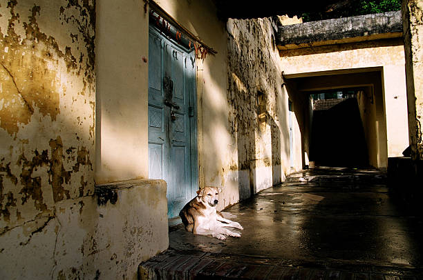 lazy dog resting in the afternoon - dog looking at floor path stockfoto's en -beelden