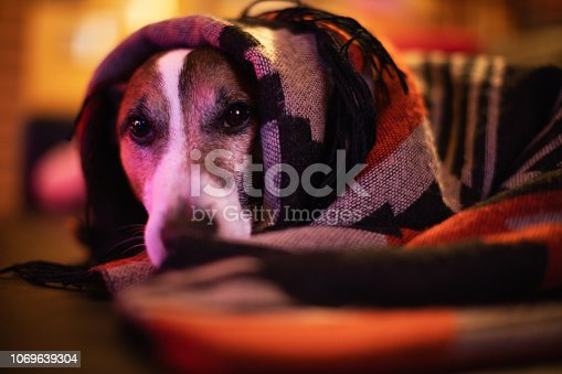 Lazy dog wrapped in warm blanket during winter