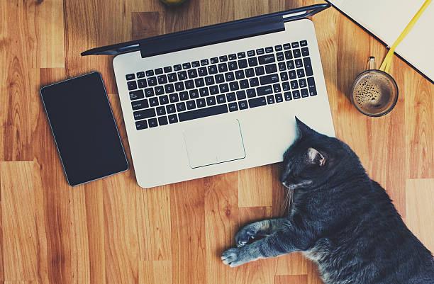 Lazy employee a cute grey cat working on the floor picture id537696374?b=1&k=6&m=537696374&s=612x612&w=0&h=yzll30nuigqcc8qknezv1lfik9yguawzgzom5aeugv8=