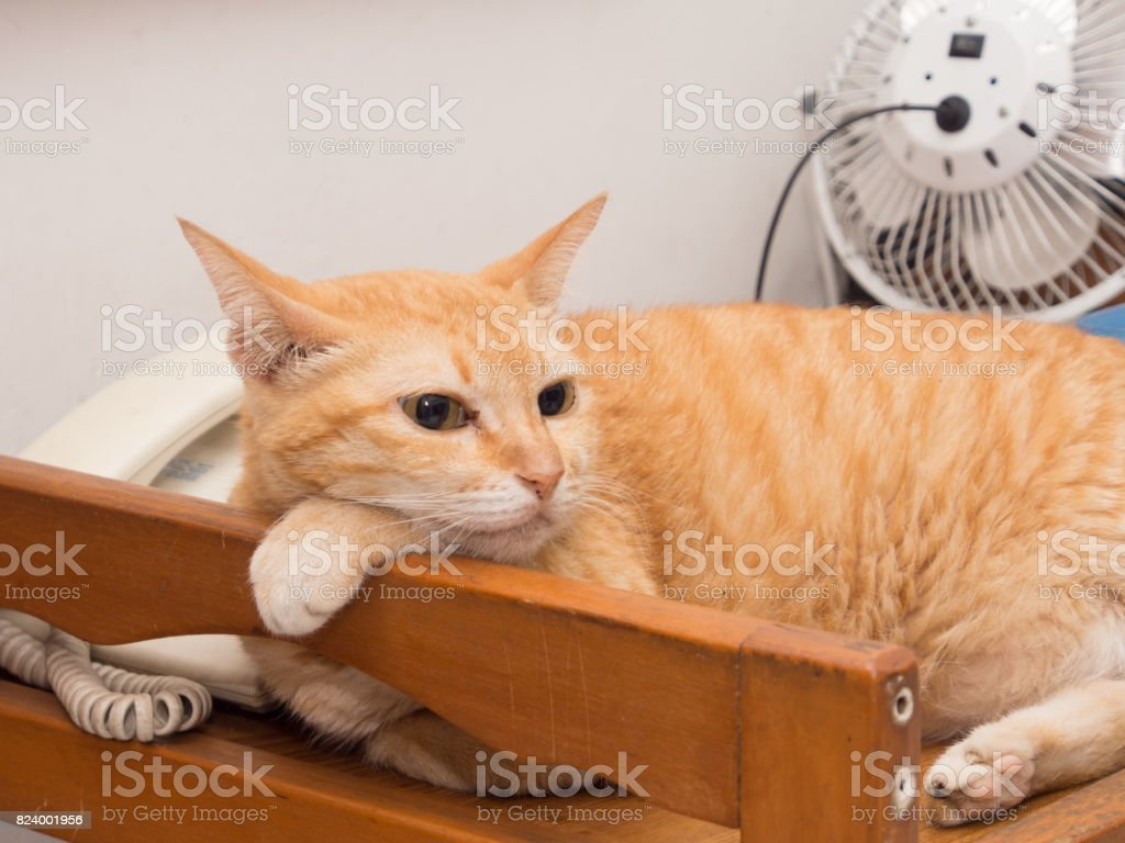 Lazy Ginger Cat Resting stock photo