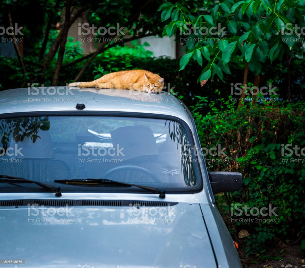Lazy ginger cat sleeping on car roof stock photo