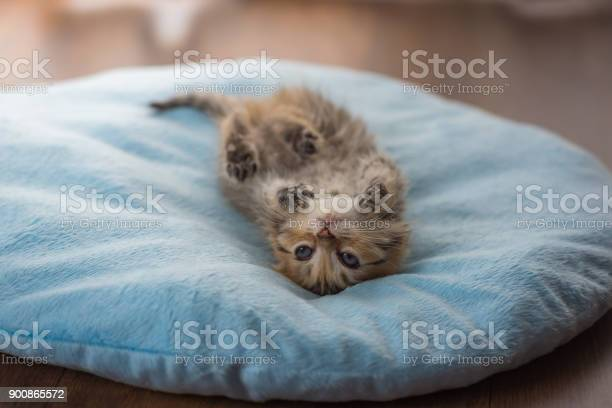 Lazy kitten lying picture id900865572?b=1&k=6&m=900865572&s=612x612&h=6xginqiypvi51y rq9vflfly3gs6hgeec5sekzfhhq0=