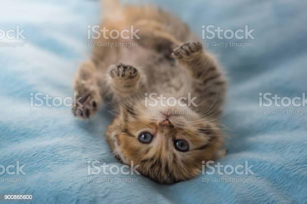 Lazy kitten lying picture id900865600?b=1&k=6&m=900865600&s=612x612&h=mz zbahfk8qi 4ovzrotqbv8ckvfg1qqlh3fzz9ynf4=