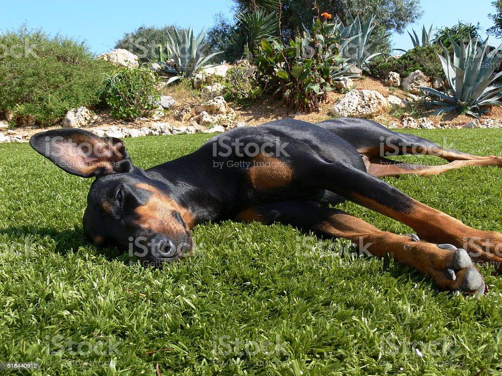 Lazy Lie Down stock photo