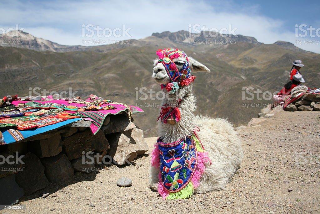 Lazy Llama stock photo