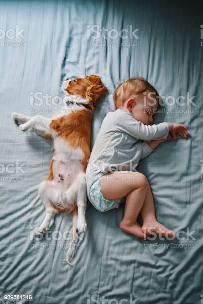 Lazy mornings at home picture id939584246?b=1&k=6&m=939584246&s=612x612&h=0pmkh2lodjhyvvwbrossdznwtkeyz4jo7rq2 z8vppk=