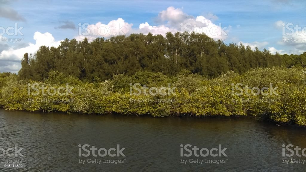 Lazy river in Florida Marsh stock photo