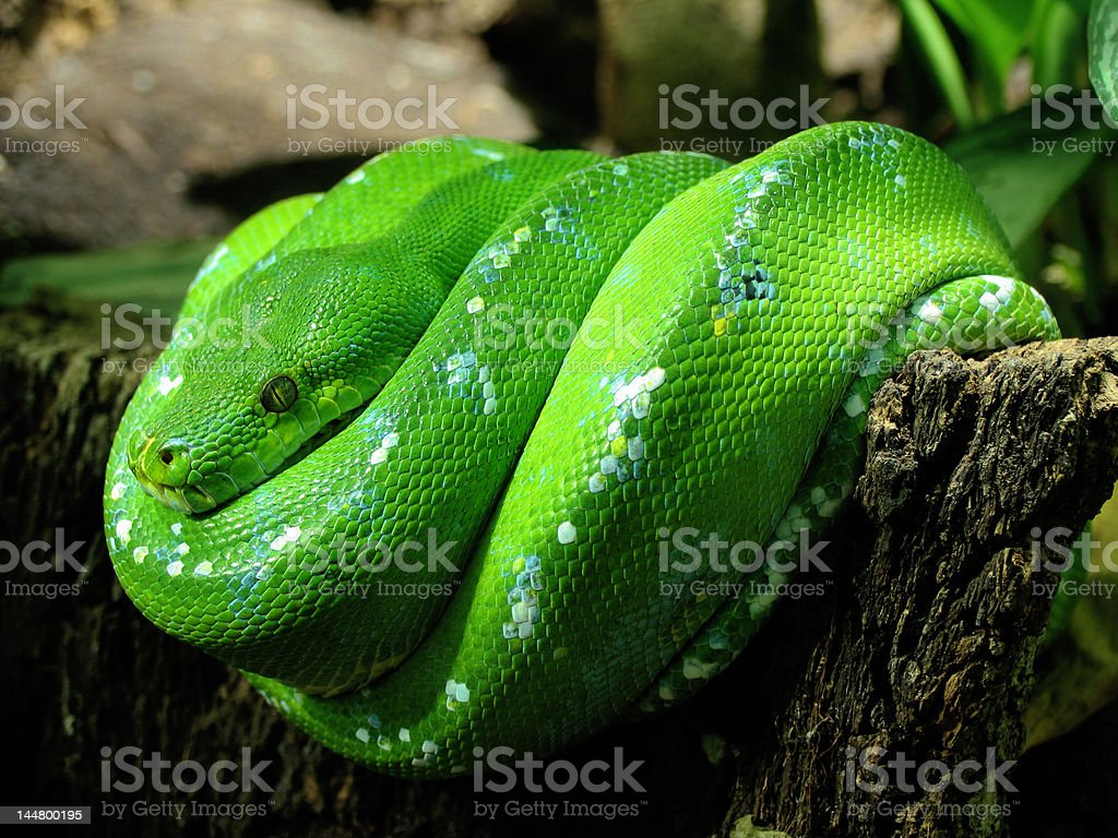Lazy Snake stock photo