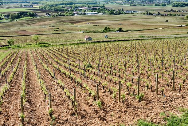 Corton Le Grand Cru Weingut – Foto