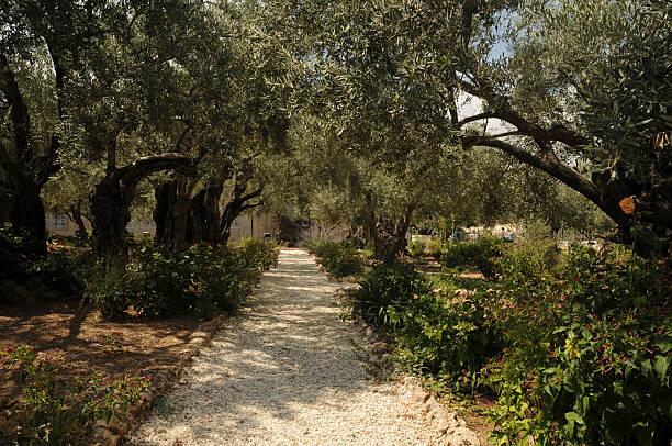 Le jardin de Gethsémani stock photo
