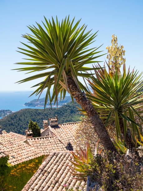 Le Jardin Exotique Deze Cactus Garden Nice France Stock Photo