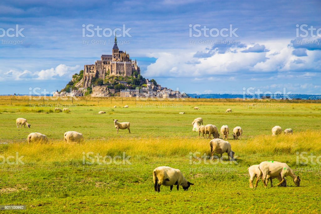 Le Mont Saint-Michel with sheep grazing on green meadows in summer, Normandy, France stock photo