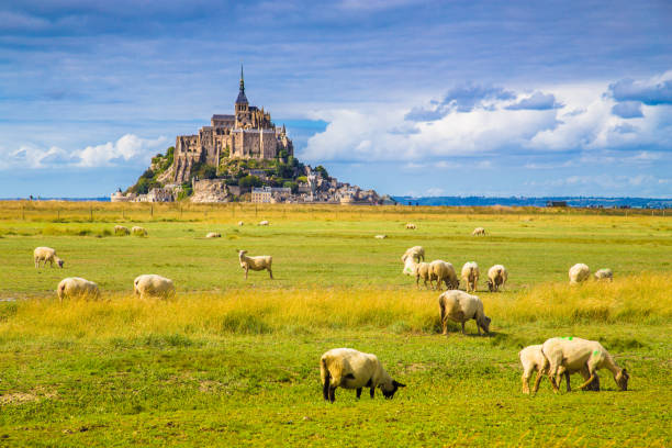 Le Mont Saint-Michel with sheep grazing on green meadows in summer, Normandy, France Beautiful view of famous historic Le Mont Saint-Michel tidal island with sheep grazing on fields of fresh green grass on a sunny day with blue sky and clouds in summer, Normandy, northern France manche stock pictures, royalty-free photos & images