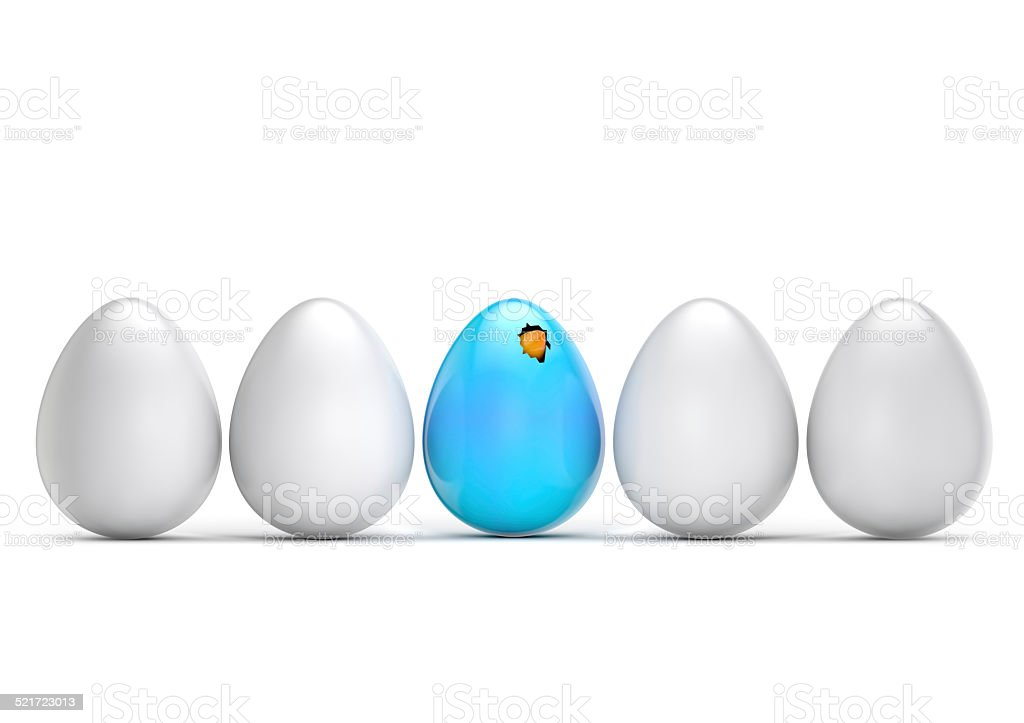 leader chick hatching egg stock photo