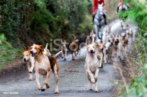 Foxhounds in rural England