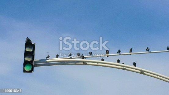Skyline Birds