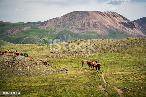 A man leads a herd of llama pack animals through the mountains on the Continental Divide Trail, San Juan National Forest, Weminuche Wilderness, Rocky Mountains, Silverton, CO, USA
