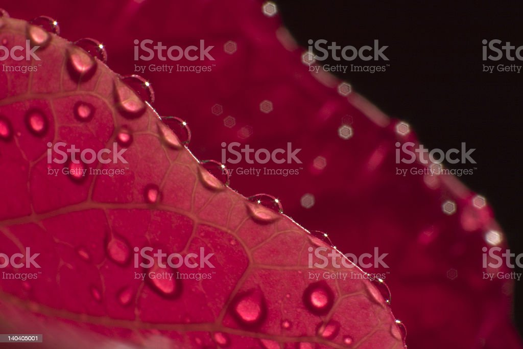 leaf and dewdrops stock photo