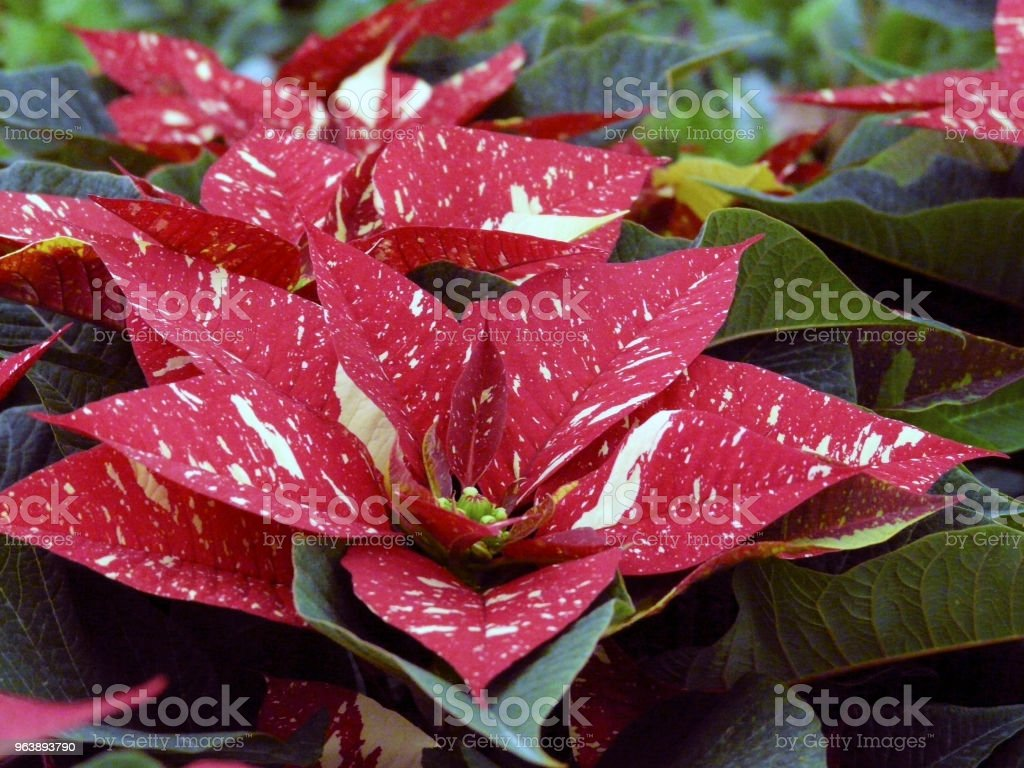 leaf and flower composition - Royalty-free Blossom Stock Photo