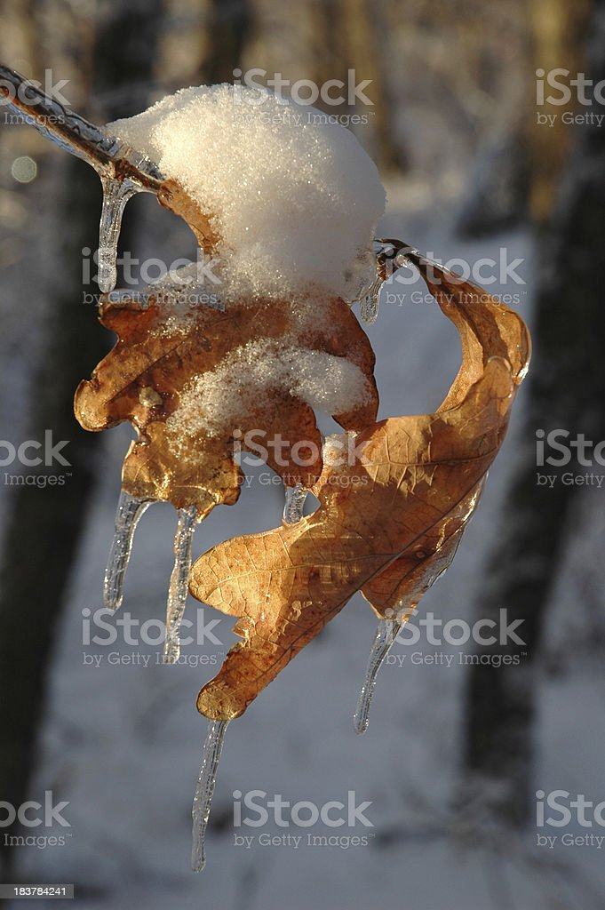 Leaf and Ice stock photo