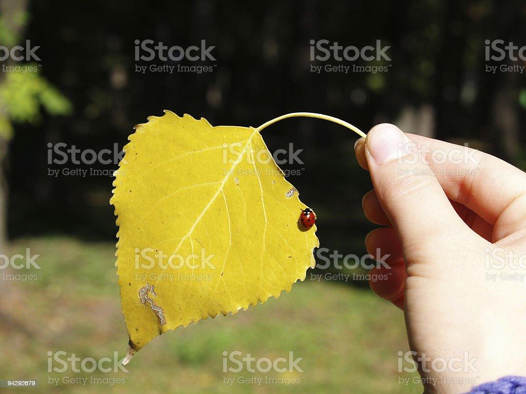 Leaf and ladybug stock photo